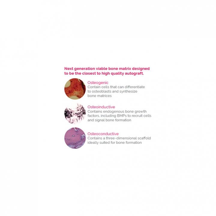 ViBone® Cryopreserved Viable Bone Matrix - slide 1